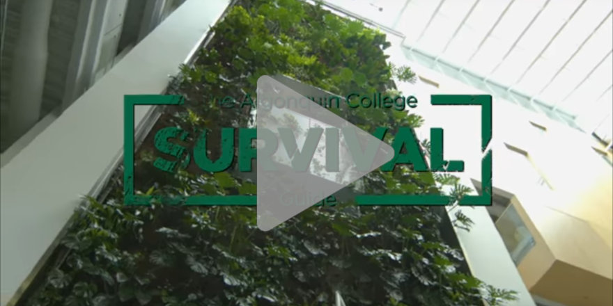 Algonquin College Survival Guide [VIDEO]