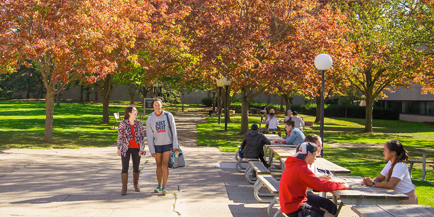 Beautiful fall colours on Brock University's sunny campus,